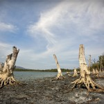 Dead trees at Maubara lake, one hour drive from dili. UN Photo by Martine Perret.