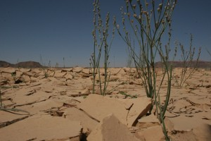 Podcast: Climate change and the human impact of desertification - DARA